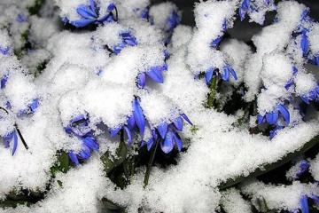 Kyiv sous la neige de printemps (photos)