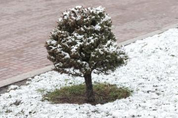 Frühlingsschnee in Kyjiw
