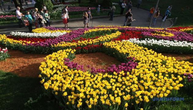 Топ-10 квітів для клумби