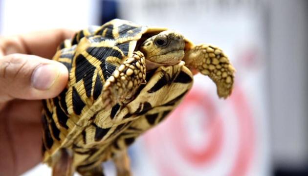 В аэропорту Манилы нашли более 1500 черепах в багаже