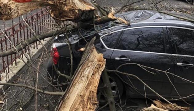 У центрі столиці вітер повалив дерево на іномарку