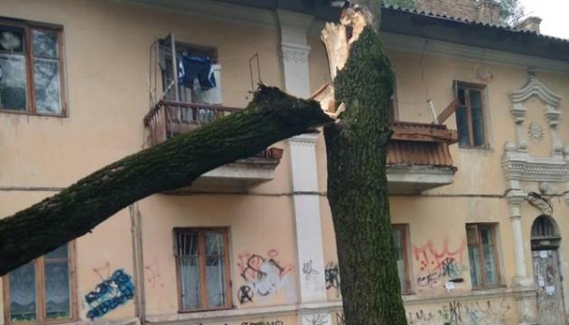 Київзеленбуд підрахував, скільки дерев наразі повалила негода
