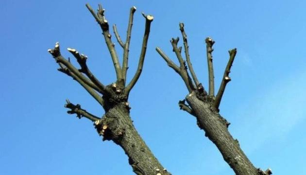 Киянам нагадали, чому необхідно обрізувати дерева