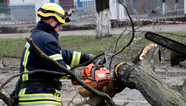 У Миколаєві вітер повалив дерево на маршрутку, постраждали діти
