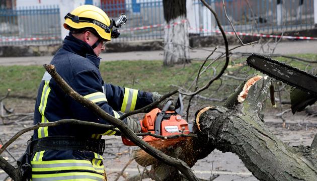 Unwetter: Baum fällt auf Bus in Mykolaiw – Fahrer und zwei Kinder verletzt