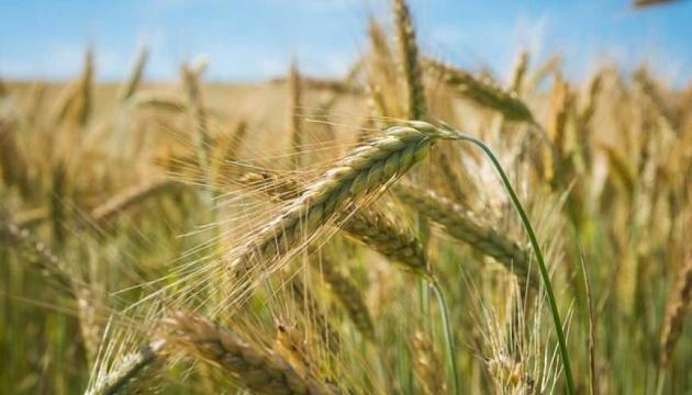 Украина экспортировала рекордные 85 тысяч тонн ржи