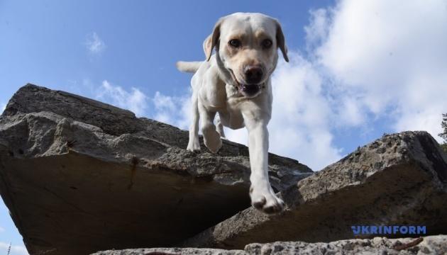 Нескінченна гра у схованки: як навчають собак-рятувальників