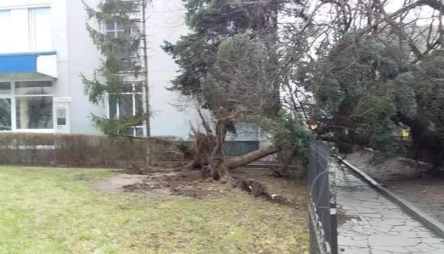 У Житомирі буревій повалив майже 30 дерев