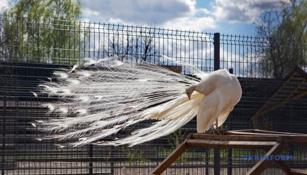 У Луцькому зоопарку оселилися нові мешканці