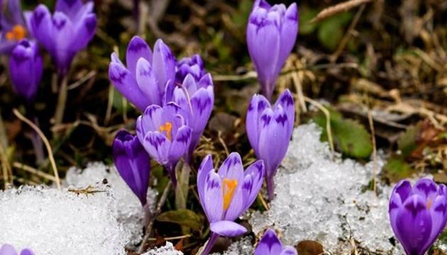 Примхи весни: українцям обіцяють сніг з дощем і