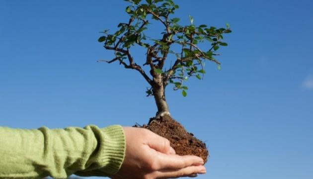 Діаспорян Йорданії запрошують посадити українські дерева у парку