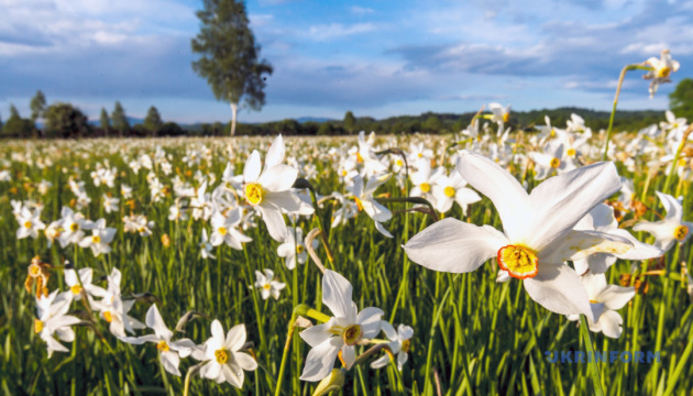 Усім цвітом цвіте Закарпаття!