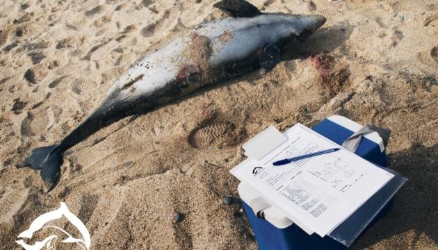 Біля берегів окупованої Євпаторії масово гинуть дельфіни