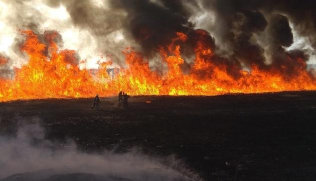 На Херсонщині сталася лісова пожежа — підозрюють підпал