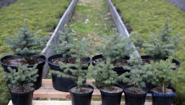 80 тисяч дерев за день: в Україні встановили