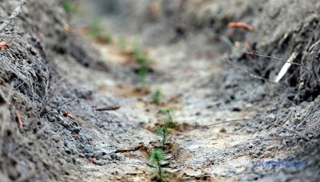 На ділянках суцільних зрубів висадили 122 мільйони молодих дерев