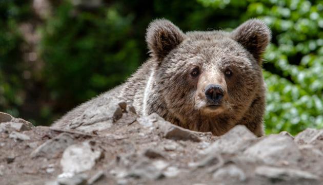У Київському зоопарку прокинулися ведмеді