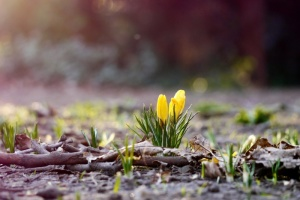 Украинцам обещают потепление к Пасхе