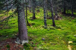 В Україні цієї весни висадили 24 тисячі гектарів лісу