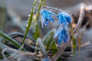 Синоптики предупредили о сильных заморозках