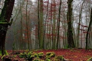 В Україні започаткують проект з адаптації лісів до змін клімату
