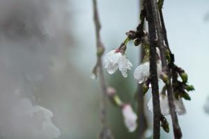 Синоптики сказали, где на Пасху ждать дождей с грозами