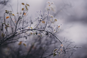 Не дожди, так заморозки - синоптики пока не обещают бабьего лета