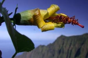 Дрон нашел цветок, которую считали исчезнувшим