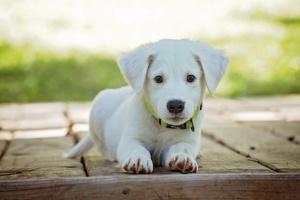 Ученые выяснили, что собаки продлевают жизнь своим хозяевам