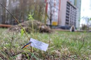 У Києві висадили алею на честь політв'язнів та полонених Кремля