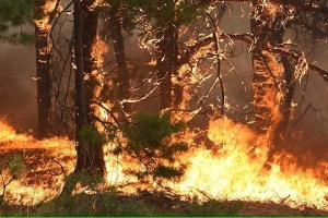 Fire hazard in Ukraine to be high until end of week