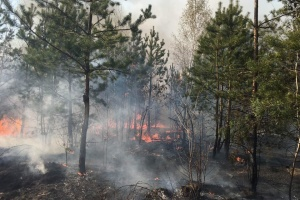 Extreme level of fire hazard remains in some regions of Ukraine