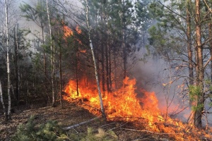 Extreme fire hazard level expected in Kyiv region