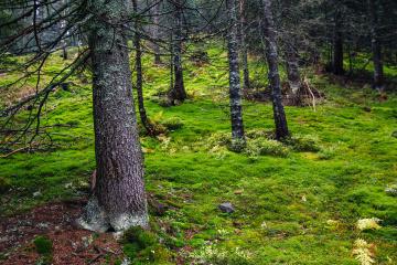 Rund 24.000 Hektar Wald im Frühling gepflanzt