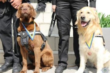 929 perros sirven en la policía ucraniana