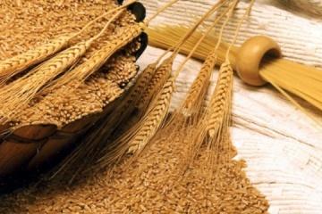 Ukraine's grain exports exceed 38.6 mln tonnes