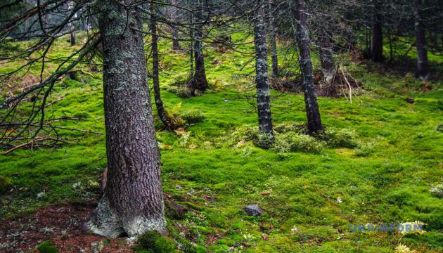 Рада ухвалила зміни до закону про збереження лісів