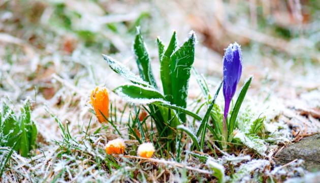 Синоптики прогнозують нічні заморозки у більшості областей
