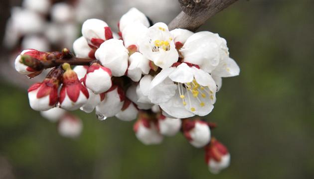 11 апреля: народный календарь и астровестник