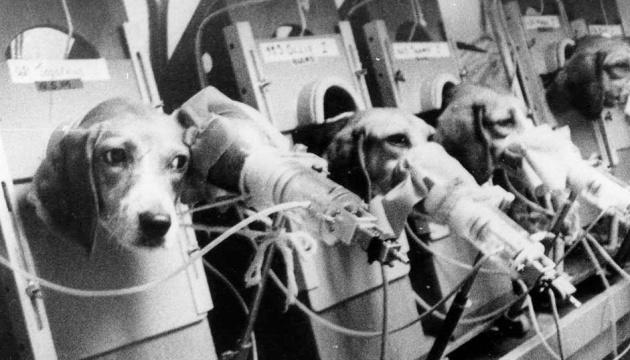 Швейцарці планують покласти край тестам продукції на людях і тваринах