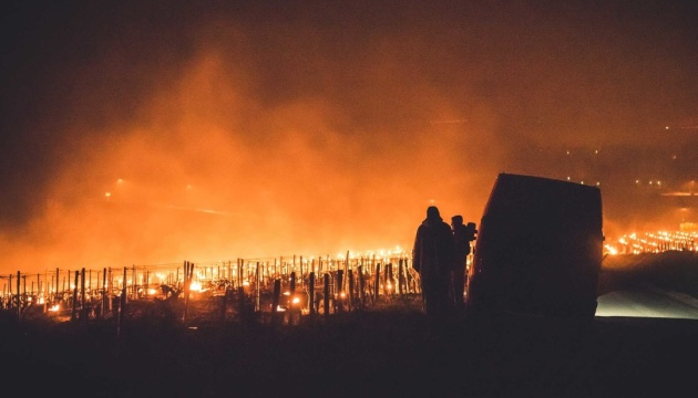 Для защиты виноградников от заморозков во Франции разожгли тысячи костров
