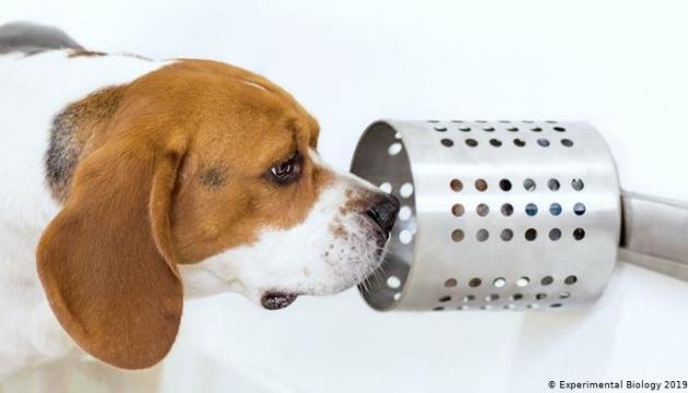 Собаки нюхом чують рак легенів
