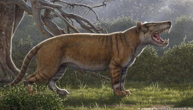 Масивні ікла і вага півтори тонни: у Кенії відкрили гігантського предка левів