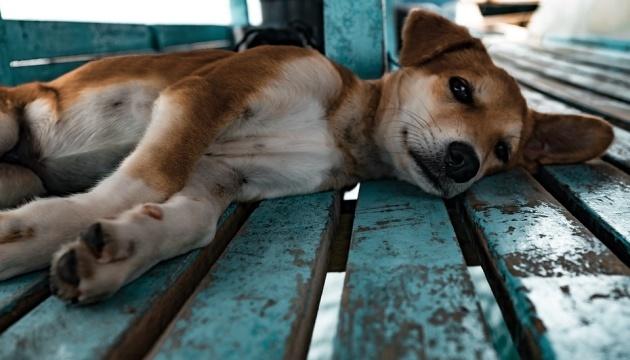 П'ять років за жорстоке поводження: жінка заморила голодом 18 тварин