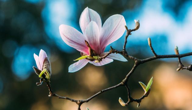 25 квітня: народний календар і астровісник