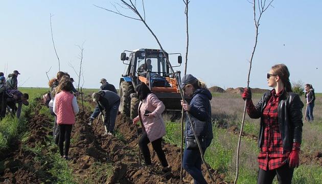 На Арабатській Стрілці висадили більше тисячі дерев