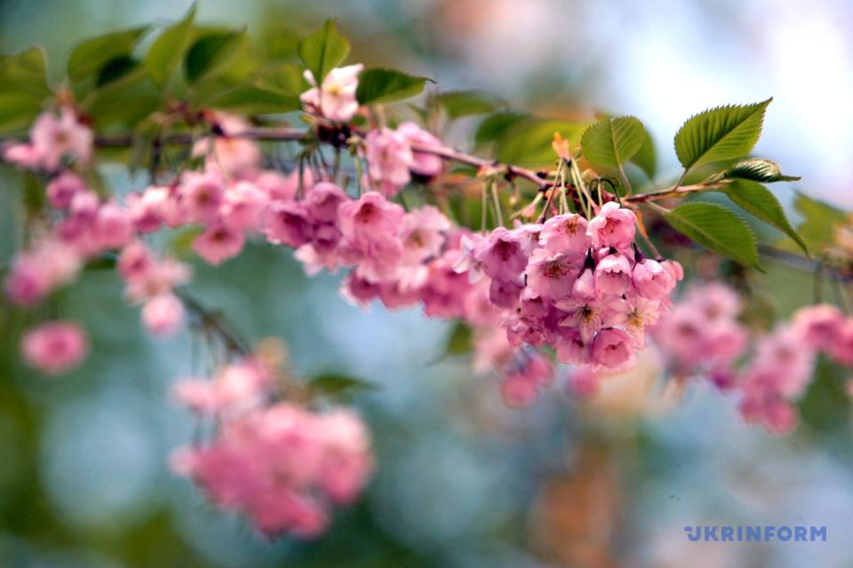 Весна у Києві / Фото: Юлія Овсяннікова, Укрінформ