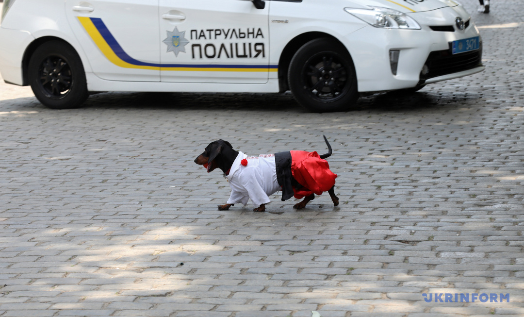 Фото: Ніна Ляшонок