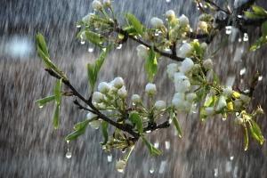 В Украине — новый циклон: где дождей будет больше всего