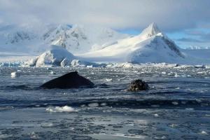 Из-за COVID-19 британцы на год откладут полевые исследования в Антарктиде